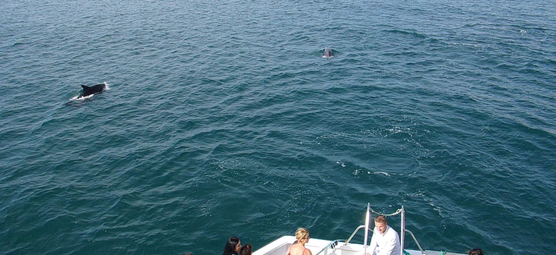 albufeira dolphins watching