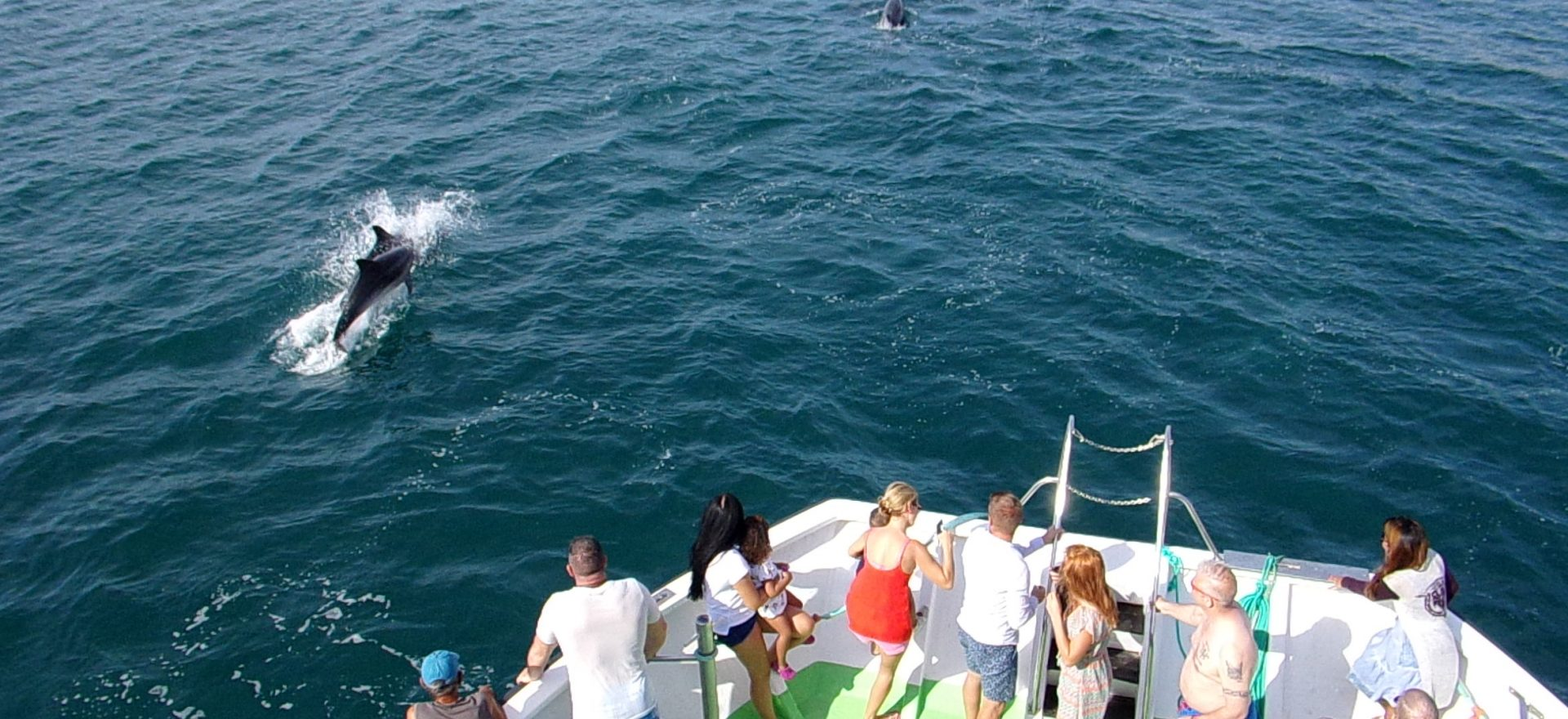 albufeira boat trips dolphins