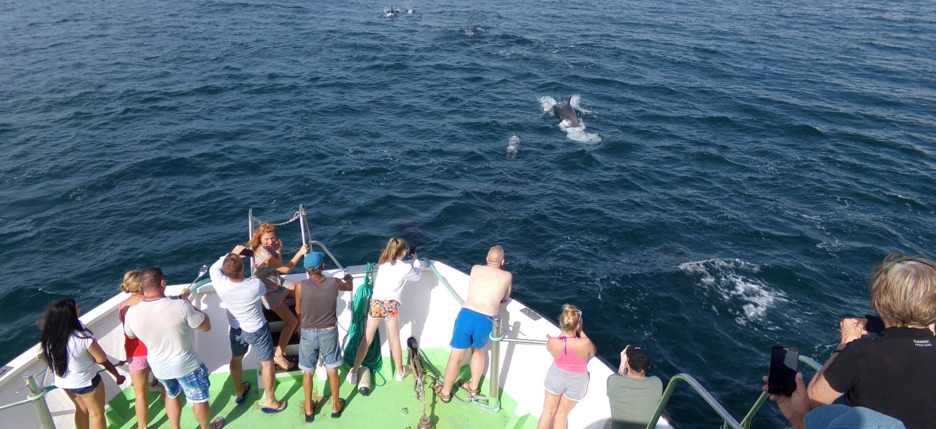 albufeira dolphins watching trips